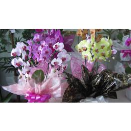 Orquídeas cores variadas
